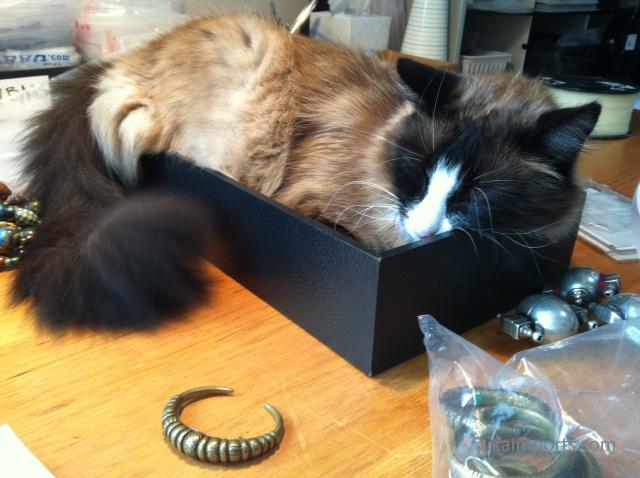 Bodhi in a box