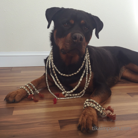 Tika office dog dressed up in skull mala and bracelets