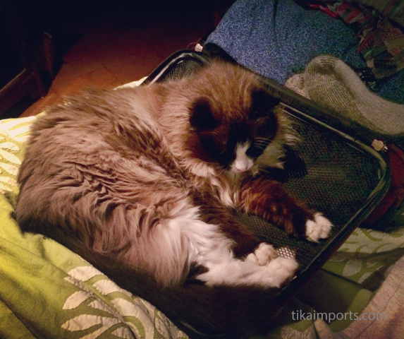 office kitty Bodhi laying on Julie's suitcase