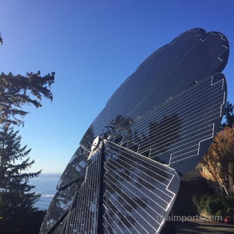 Tika's Solar Flower- soaking up the sun