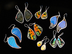 natural butterfly wing and sterling silver Shimmerwing earrings