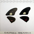 full forewing and hindwing view of Eurytides harmodius specimen