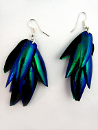 earrings made from clusters of wings from the Sternaceras Echisinata Beetle
