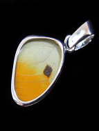 Tiny Yellow (Phoebis phillea) Shimmerwing pendant with butterfly set in sterling silver