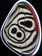"Closeup of Tiny ""88"" (Diaethria neglecta) Shimmerwing pendant with butterfly set in sterling silver"