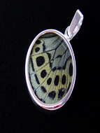 Small Sage Green Round (Callithea Philotima) Shimmerwing pendant with butterfly set in sterling silver