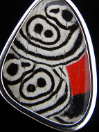 "Closeup of small ""88"" (Diaethria neglecta) Shimmerwing pendant with butterfly set in sterling silver"