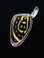 Small Speckled Numberwing (Callicore aegina) Shimmerwing Pendant