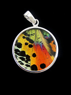 Medium Rainbow Sunset Round (Urania rhipheus) Shimmerwing pendant with butterfly set in sterling silver