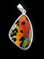 Medium Rainbow Sunset (Urania rhipheus) Shimmerwing pendant with butterfly set in sterling silver