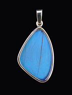 Medium Blue Morpho (morpho didius) Shimmerwing pendant with butterfly set in sterling silver
