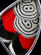 "Closeup of Medium ""88"" (Diaethria neglecta) Shimmerwing pendant with butterfly set in sterling silver"