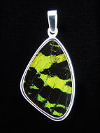 Medium green and black (Urania rhipheus) shimmerwing pendant with butterfly set in sterling silver