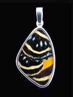 Medium Speckled Numberwing (Callicore aegina) Shimmerwing Pendant