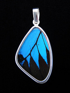 Medium Blue & Black (Papilio ulysses) Shimmerwing pendant with butterfly set in sterling silver