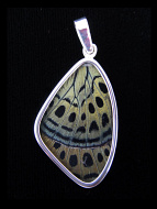Medium Sage Green (Callithea Philotima) Shimmerwing pendant with butterfly set in sterling silver