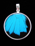 Large Blue & Black (Papilio ulysses) Shimmerwing pendant with butterfly set in sterling silver