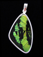 Large green and black (Urania rhipheus) shimmerwing pendant with butterfly set in sterling silver