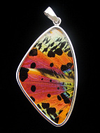 X-Large Rainbow Sunset (Urania rhipheus) Shimmerwing pendant with butterfly set in sterling silver