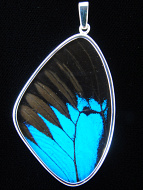 XXL Blue & Black (Papilio ulysses) Shimmerwing pendant with butterfly set in sterling silver