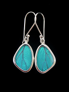 Tiny Blue Morpho (morpho didius) Shimmerwing earrings with butterfly set in sterling silver