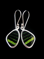 Tiny Green & Black Wing (Urania leilus) Shimmerwing earrings with butterfly set in sterling silver