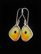 Tiny Yellow Wing (Anteos menippe) Shimmerwing earrings with butterfly set in sterling silver