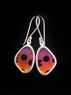 Tiny Hot Sunset Wing (Urania rhipheus) Shimmerwing earrings with butterfly set in sterling silver