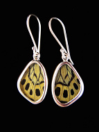 Tiny Sage Green (Callithea Philotima) Shimmerwing earrings with butterfly set in sterling silver