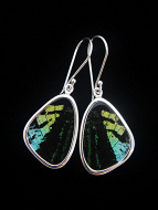 Small Aquamarine & Black (Urania leilus) Shimmerwing earrings with butterfly set in sterling silver
