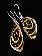 Small Speckled Numberwing (Callicore aegina) Shimmerwing Earrings