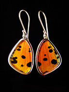Small Hot Sunset Wing (Urania rhipheus) Shimmerwing earrings with butterfly set in sterling silver