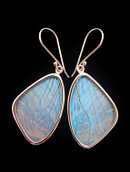 Medium Pearl Blue (Morpho sulkowski) Shimmerwing earrings with butterfly set in sterling silver