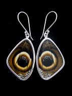Medium Owl Eye (Caligo idomeneus) Shimmerwing earrings with butterfly set in sterling silver