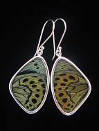Medium Sage Green (Callithea Philotima) Shimmerwing earrings with butterfly set in sterling silver