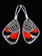 """Medium """"88"""" (Diaethria neglecta) Shimmerwing earrings with butterfly set in sterling silver"""