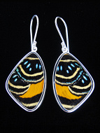 Medium Speckled Numberwing (Callicore aegina) Shimmerwing Earrings