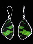 Medium Green & Black (Urania leilus) Shimmerwing Earrings