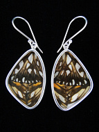 Medium Silverspangled Longwing (Dione juno) Shimmerwing Earrings