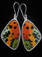 Large Rainbow Sunset (Urania rhipheus) Shimmerwing earrings with butterfly set in sterling silver