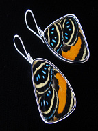 Large Speckled Numberwing (Callicore aegina) Shimmerwing Earrings