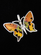 Small Rainbow Sunset (Urania rhipheus) Shimmerwing Pendant set in sterling silver butterfly design
