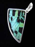 Aquamarine (Urania rhipheus) Fan Shimmerwing Pendant set in sterling silver
