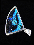Blue Flash (Ancyluris Meliboeus) Fan Shimmerwing Pendant set in sterling silver