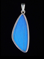 Blue Morpho (Morpho didius) Long Wing Shimmerwing Pendant set in sterling silver