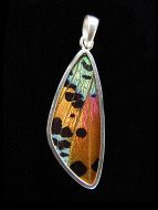 Rainbow Sunset (Urania rhipheus) Long Wing Shimmerwing Pendant set in sterling silver