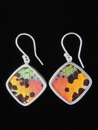 Rainbow Sunset (Urania rhipheus) Diamond Shimmerwing Earrings set in sterling silver
