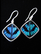 Blue Flash (Ancyluris Meliboeus) Diamond Shimmerwing Earrings set in sterling silver