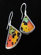 Rainbow Sunset (Urania rhipheus) Fan Shimmerwing Earrings