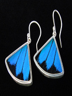 Blue & Black (Papilio ulysses) Fan Shimmerwing Earrings set in sterling silver